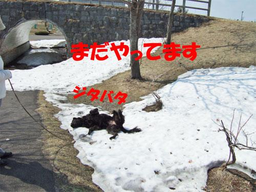 20080412-7