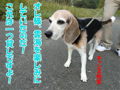 20110927-11.jpg