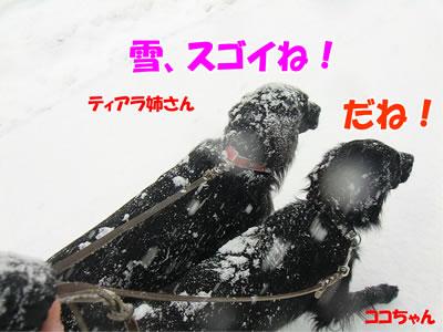 20111212-5