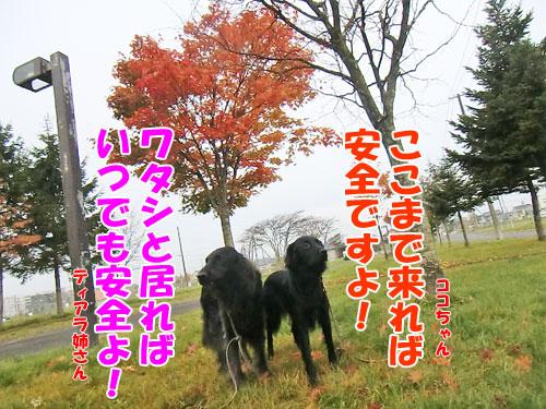 20131031-6-500