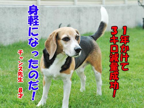 20131121metabo-chance2