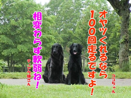 20140619-5-500