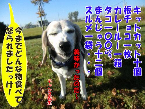 20141023syokuzai-500