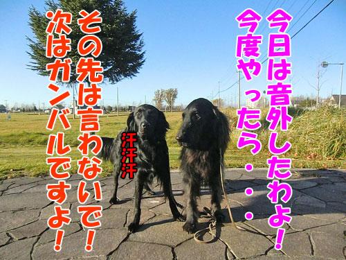 20141110-11-500