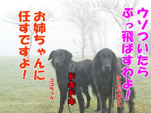 20141112-5-500