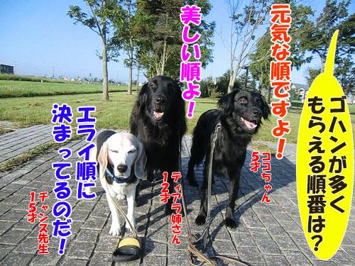 20141113kenshubetsu-dogfood