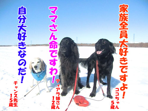 20150219dogs_vision-500
