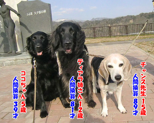 20150520dogs-age-500
