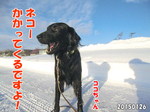 20150620-7-500
