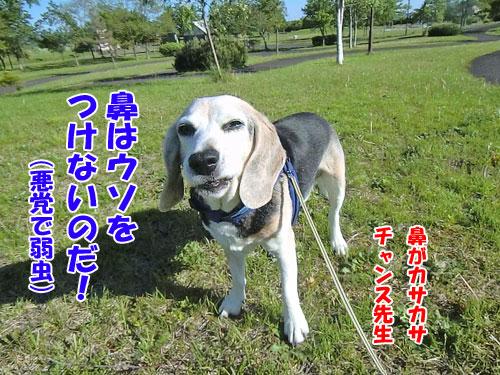 20150716-hana-500