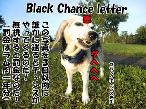 20150826Black-Chance-letter500