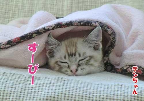 子猫のテンちゃん