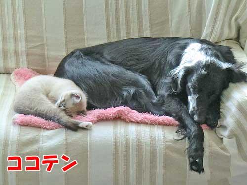 ココ姉ちゃんとテンちゃん
