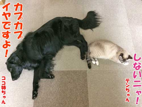 フラットのココ姉ちゃん・子猫のテンちゃん