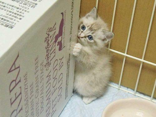 子猫まテンちゃん
