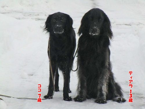 ティアラ姉さんとココ