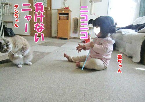 テンちゃん・姫ちゃん