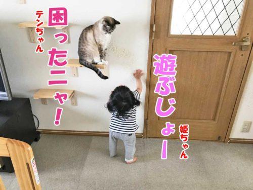 シャムミックスのテンちゃん・姫ちゃん