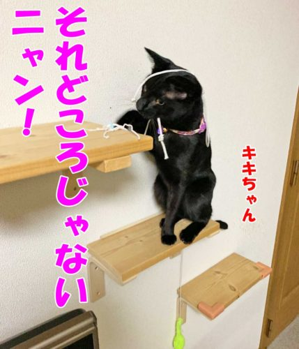 黒猫のキキちゃん
