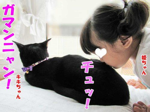 姫ちゃん・黒猫のキキちゃん
