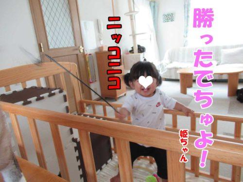 姫ちゃん・シャムミックスのテンちゃん