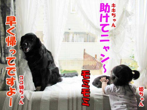 フラットのココ姉ちゃん・黒猫のキキちゃん