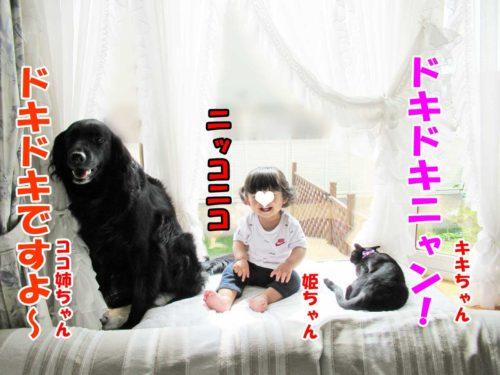 フラットのココ姉ちゃん・黒猫のキキちゃん・姫ちゃん