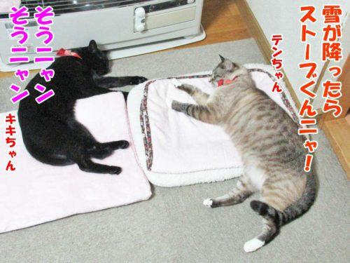 シャムミックスのテンちゃん、黒猫のキキちゃん