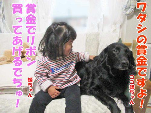 姫ちゃん・フラットコーテッドレトリーバー・ココ姉ちゃん