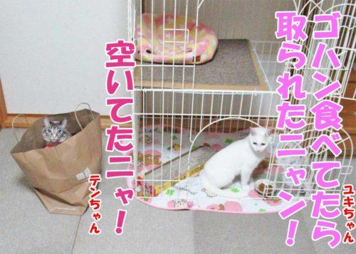 白猫ユキちゃん・白猫ユキちゃん