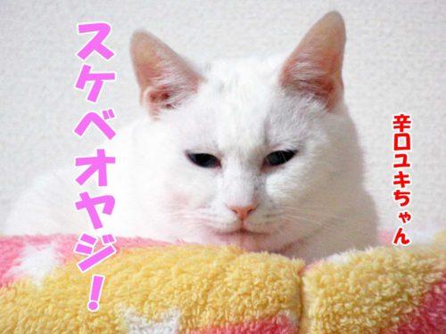 辛口ユキちゃん