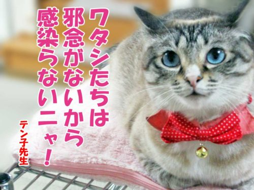 テン子先生