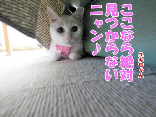 白猫ユキちゃん