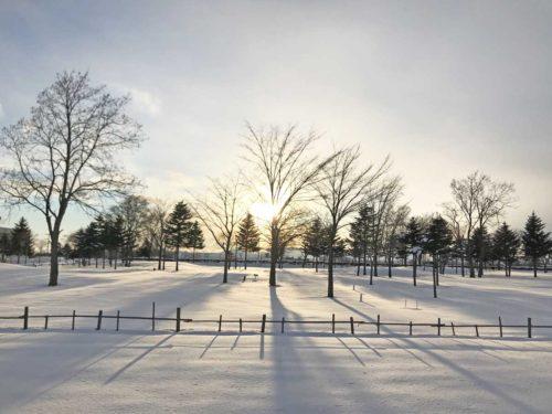 冬の散歩道から