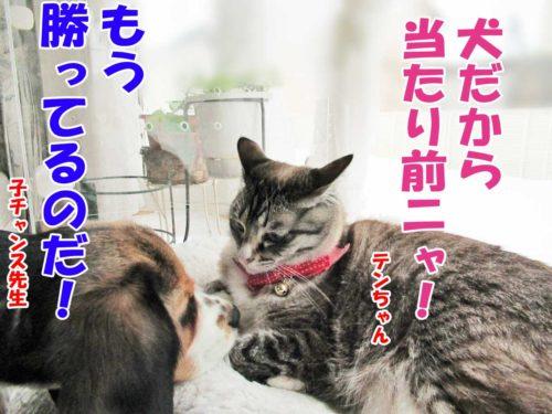 ビーグル子チャンス先生・シャムミックスのテンちゃん