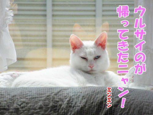 白猫ミンミン