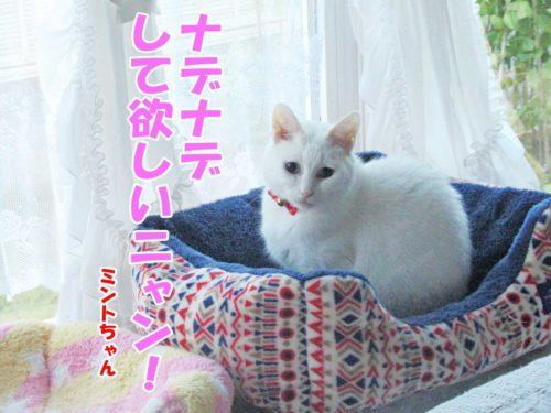 白猫ミントちゃん