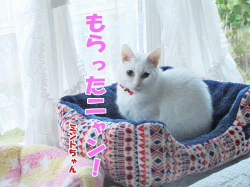 白猫ミント