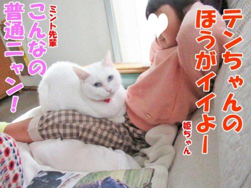 姫ちゃん・白猫ミントちゃん