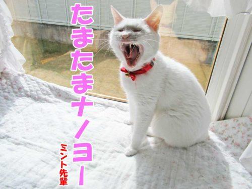 白猫ミント先輩