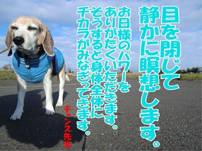 チャンスとティアラ+ココ-20111123-2