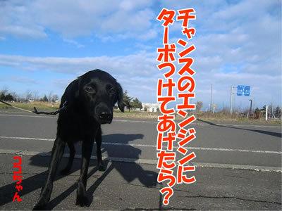 チャンスとティアラ+ココ-20111123-4