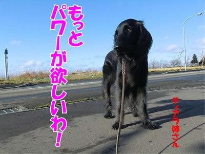 チャンスとティアラ+ココ-20111123-5