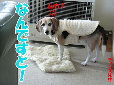 チャンスとティアラ+ココ-20111124-1