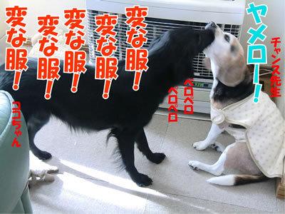 チャンスとティアラ+ココ-20111124-2