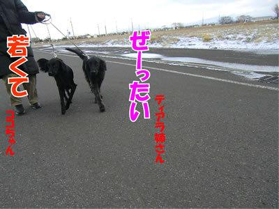 チャンスとティアラ+ココ-20111124-5