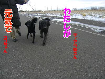 チャンスとティアラ+ココ-20111124-6