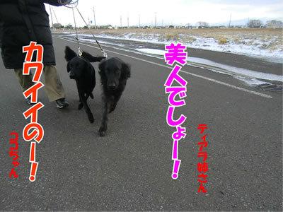 チャンスとティアラ+ココ-20111124-7