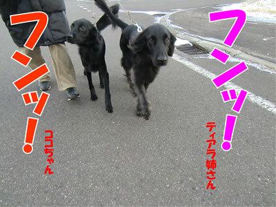 チャンスとティアラ+ココ-20111124-8