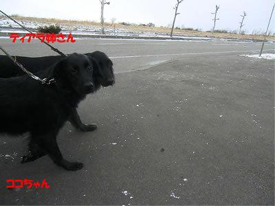 チャンスとティアラ+ココ-20111124-9